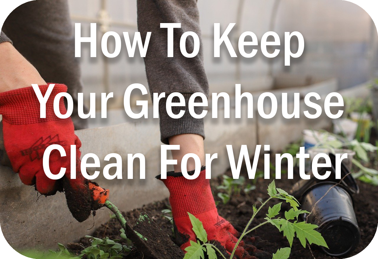 How To Keep Your Greenhouse Clean For Winter Image Header