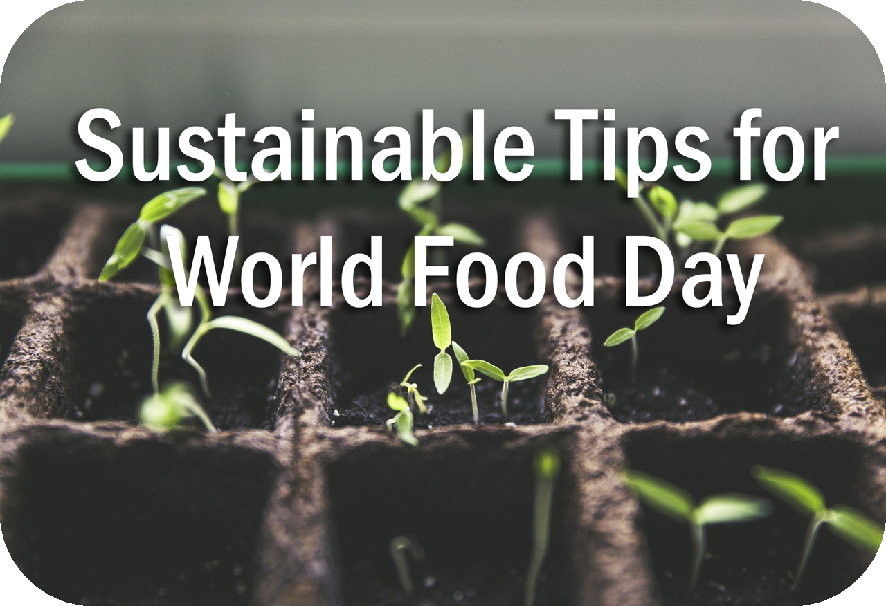 Sustainable Tips for World Food Day Header Image