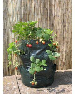 45L Botanico Lets Grow Strawberry Planter - 2 Pack