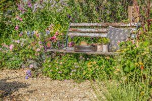 springwatch garden bench wild flowers