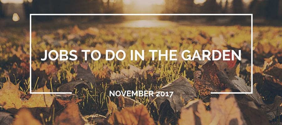 Jobs to do in the garden in November