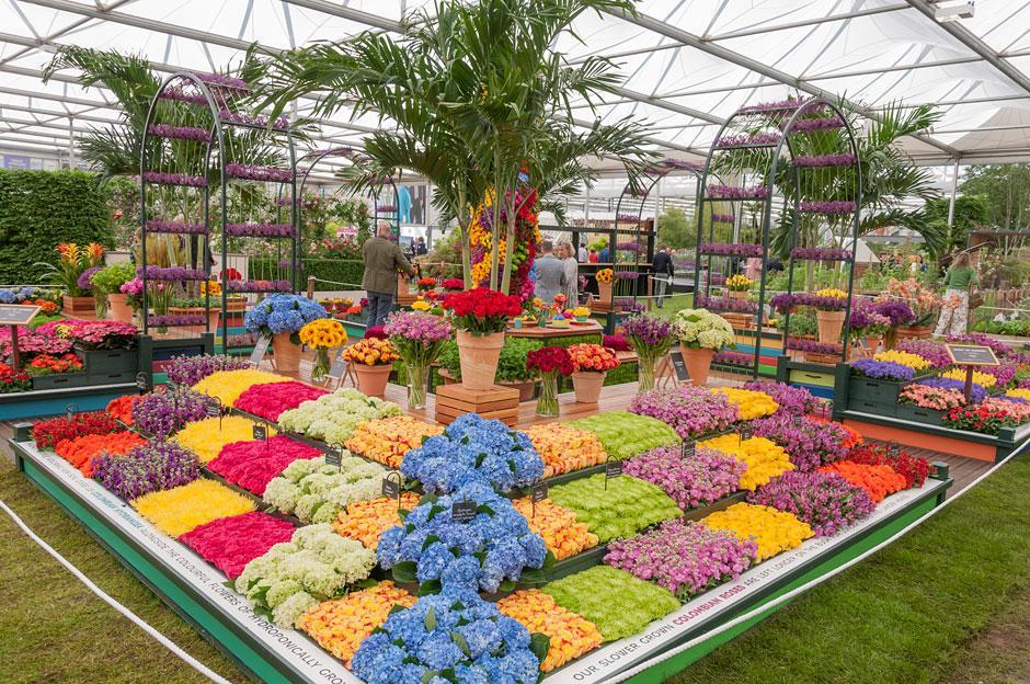 RHS flower show