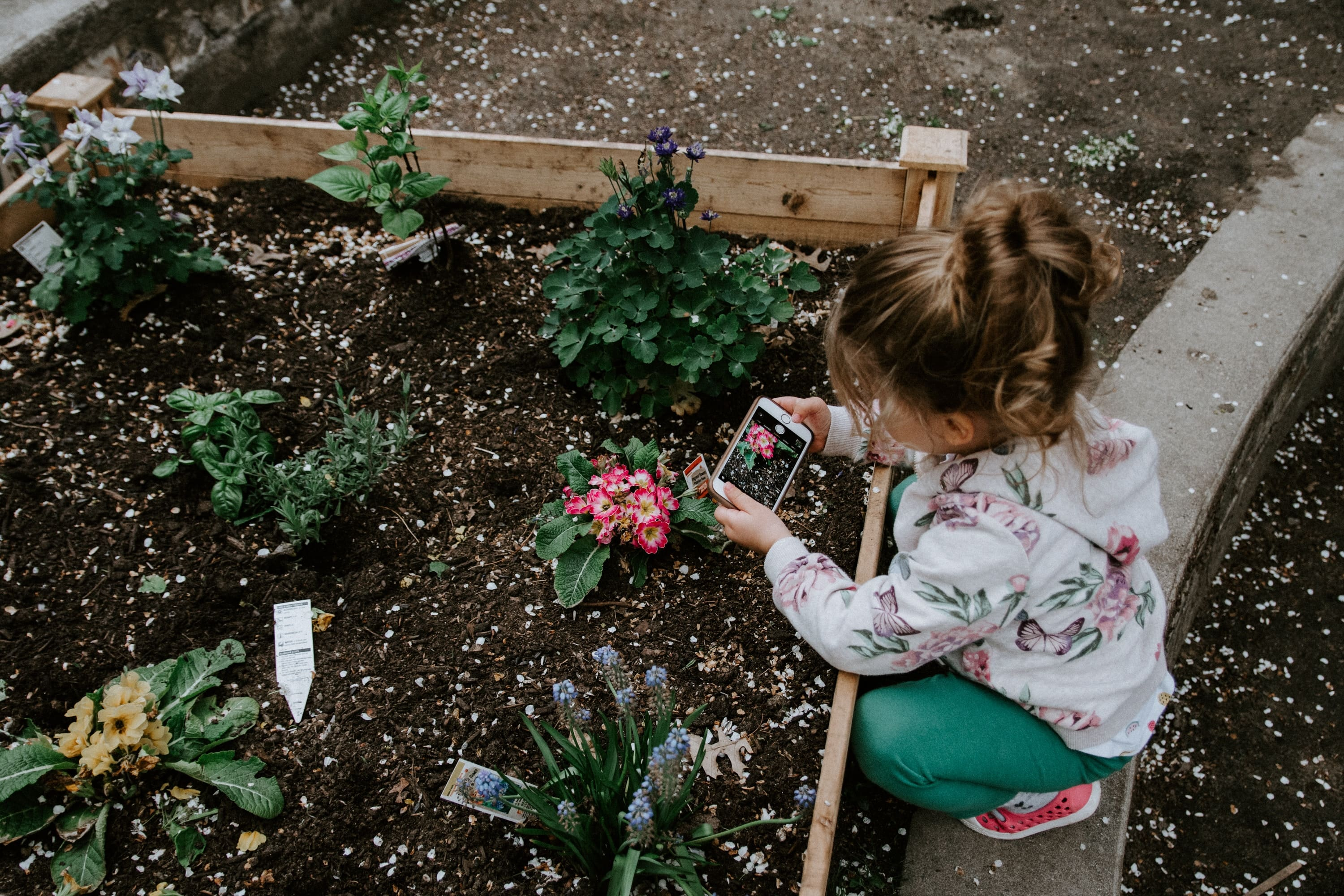 picture planting