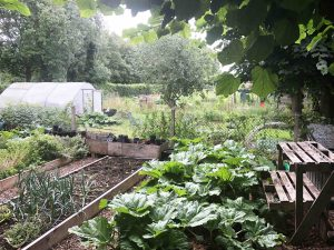 image of allotment and greenhouse