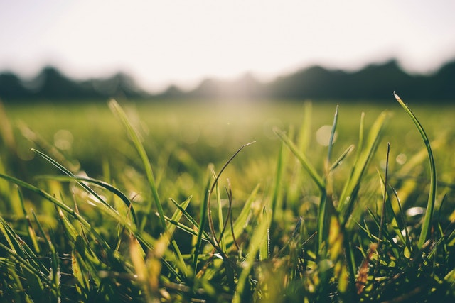 image of grass in the sunshine