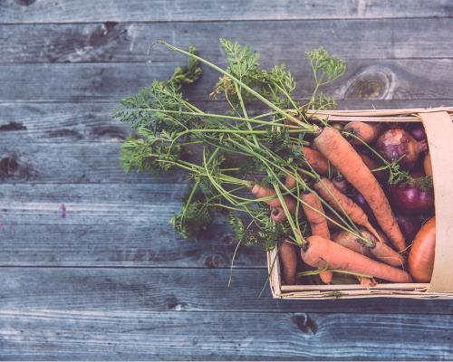 Garden Food for Composting